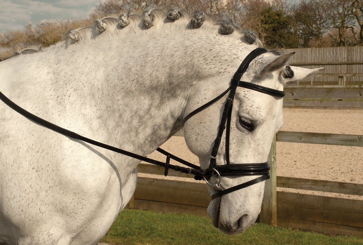 Rhinegold German Leather Patent Nose and Browband 'Comfort' Bridle with Flash Noseband