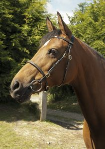 Heritage English Leather In-Hand Bridle